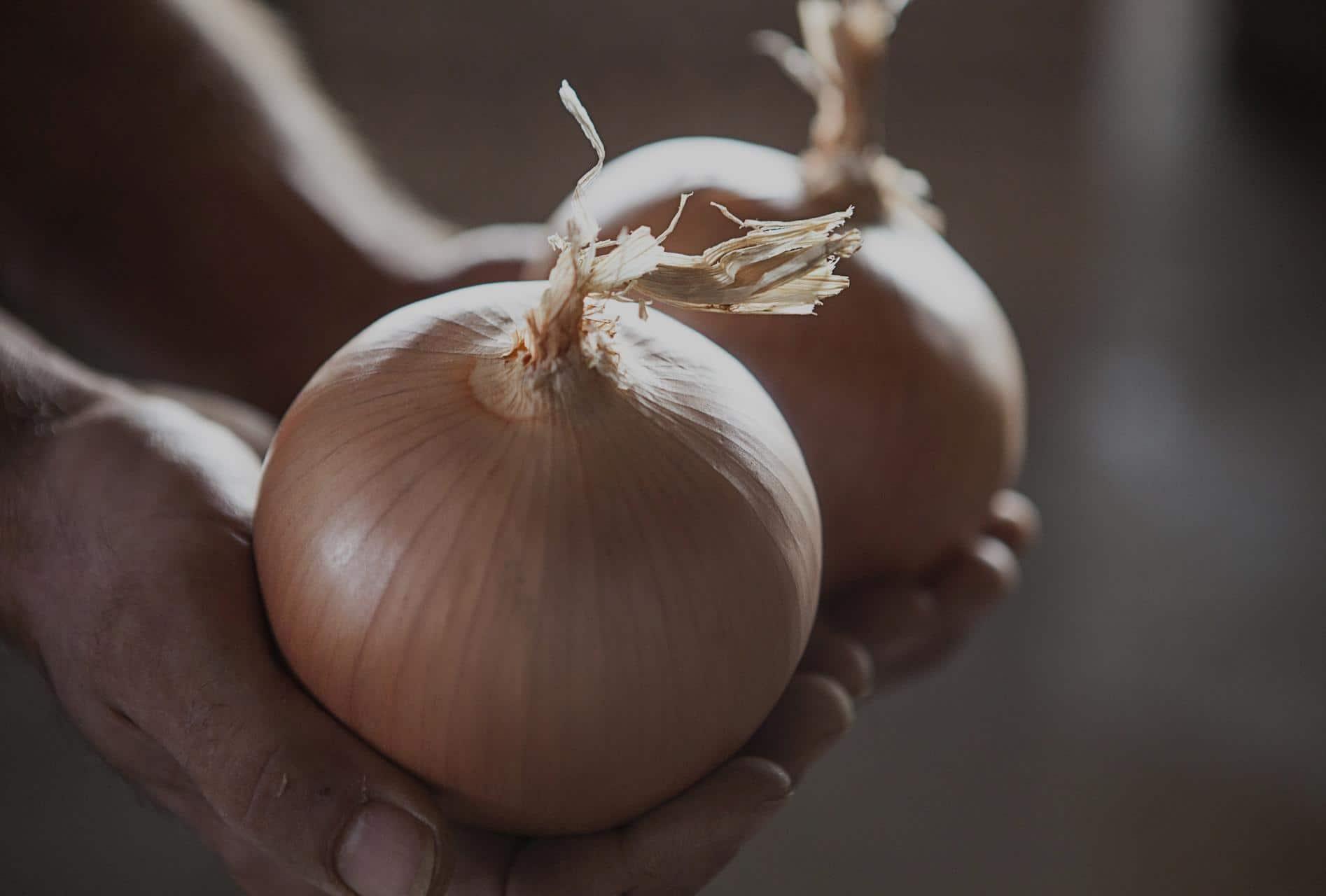 cebollas-marchite-producto-ecologico