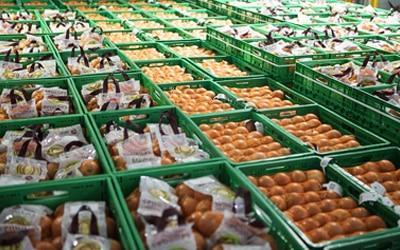 produccion-cebollas-productos-ecologicos